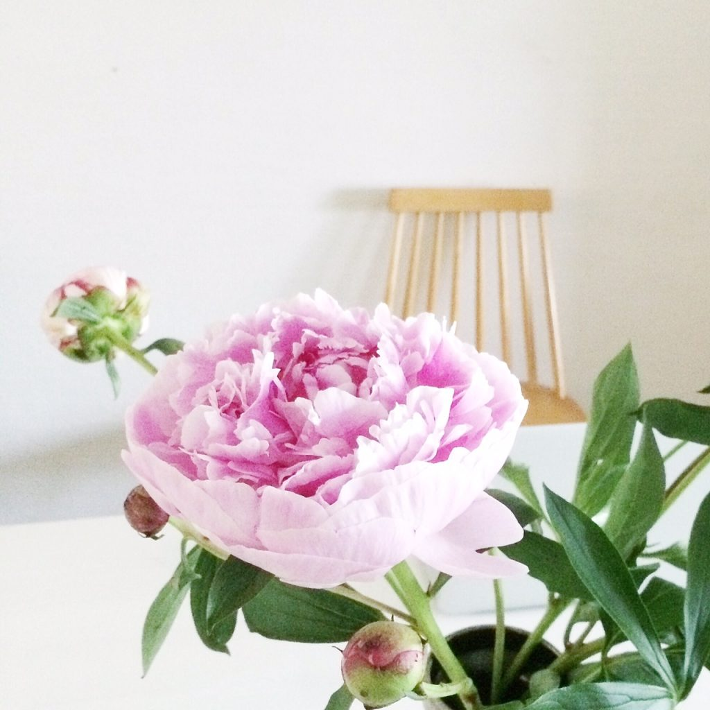styling peonies at home